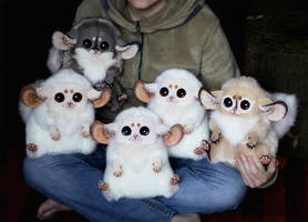 Inari Foxes. More foxes!