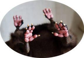 Big Owl paws by Santani