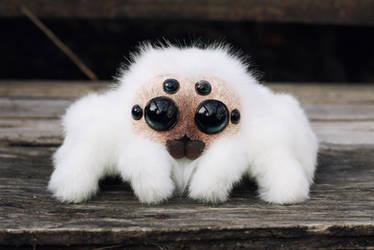 Friendly little spider: White