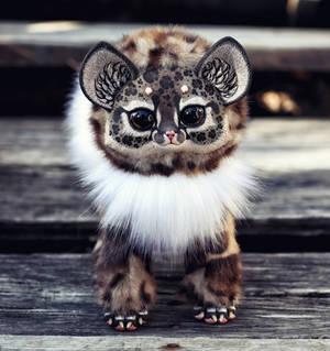 Foxy Dragon: Oncilla