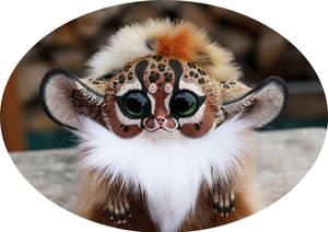 Inari Fox: Cheetah 2