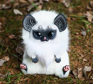Oni Fox: Siamese gray muzzle