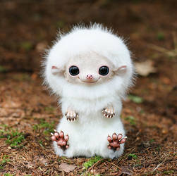 Hedgehog: White