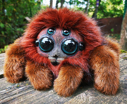 Friendly little spider: Ginger