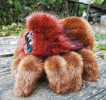 Friendly little spider: Ginger 1