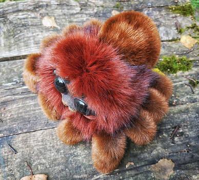 Friendly little spider: Ginger 2