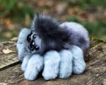Friendly little spider: Gray 2