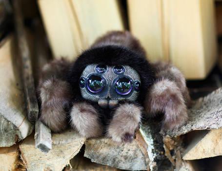 Friendly little spider: Brown