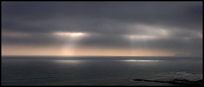 Grey coast ray