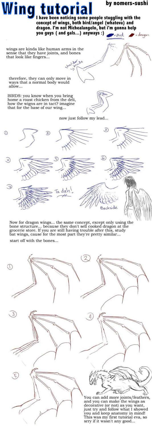 Bird Wing Anatomy Diagram Image collections - human body anatomy