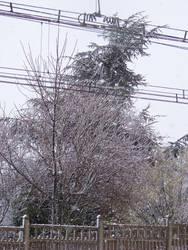 frozen tree by joho972