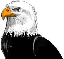 American Bald by PendoX