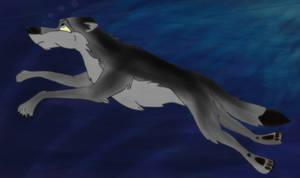 Swimming Wolf