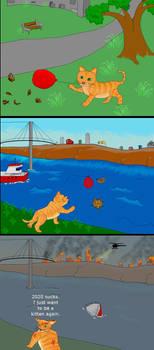 Kitten chase balloon until the year 2020