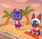 Cats on beach
