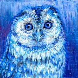 Blue Tawny Owl