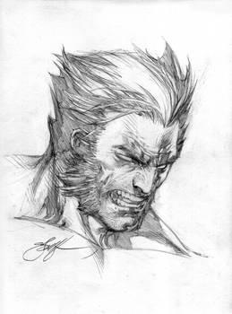Wolverine Head sketch