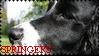 Springer Stamp by MissCelia