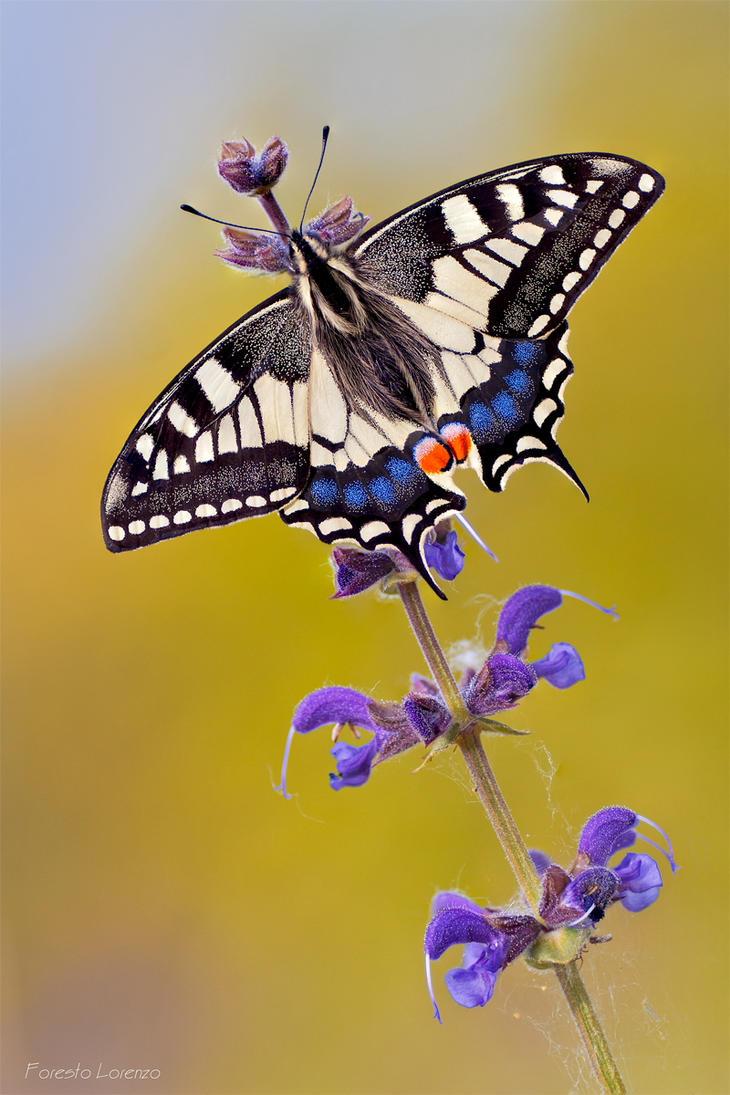 Spring by Verdenwelt
