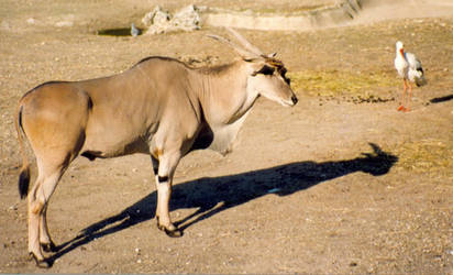 animal 01 by dandellionstock