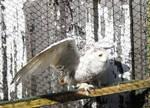 Snowy Owl Stock 6