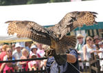Eurasian Eagle Owl Stock 3