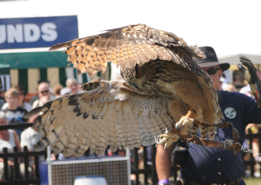 Eurasian Eagle Owl Stock 4 by LRG-Photography