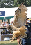 Eurasian Eagle Owl Stock 5