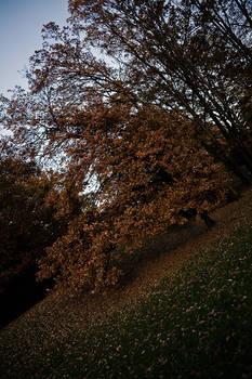 Autumn VI