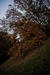 Autumn VI by hrvojemihajlic