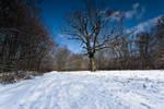 Winter in Maksimir Park X