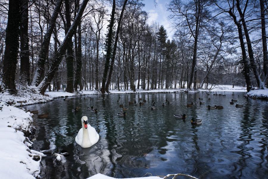 Winter in Maksimir Park XII