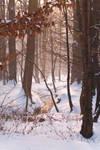 Winter in Maksimir Park XV