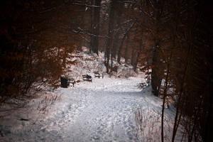 Winter in Maksimir Park XIX by hrvojemihajlic