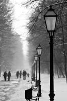 Winter in Maksimir Park XX by hrvojemihajlic