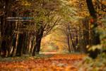 Autumn in Maksimir Park 09 V