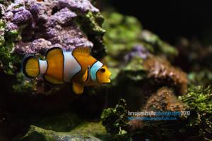 Finding Nemo by hrvojemihajlic