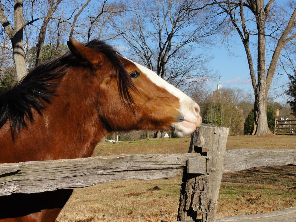 Horse 3 by Ox3ArtStock