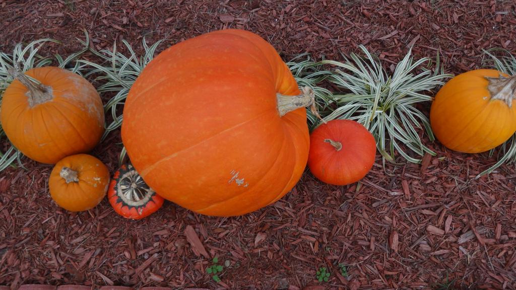 Pumpkin Time by Ox3ArtStock