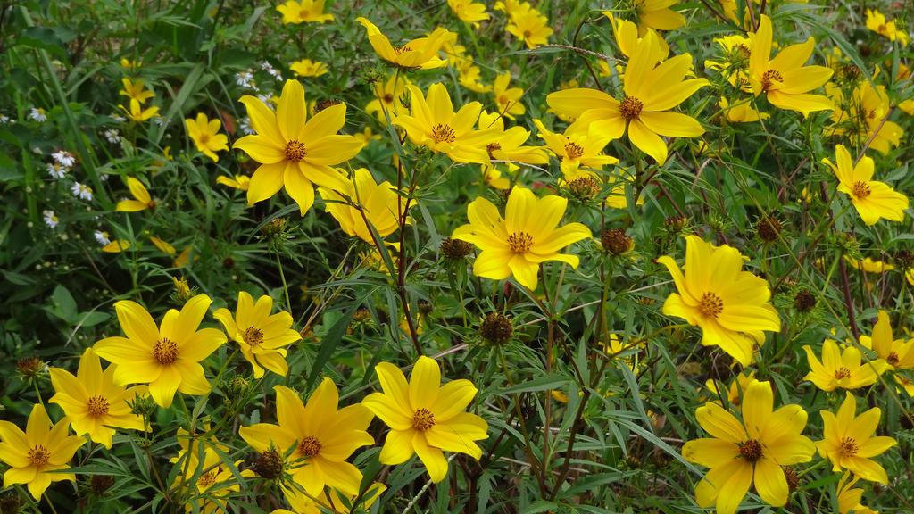 Wild Flowers by Ox3ArtStock
