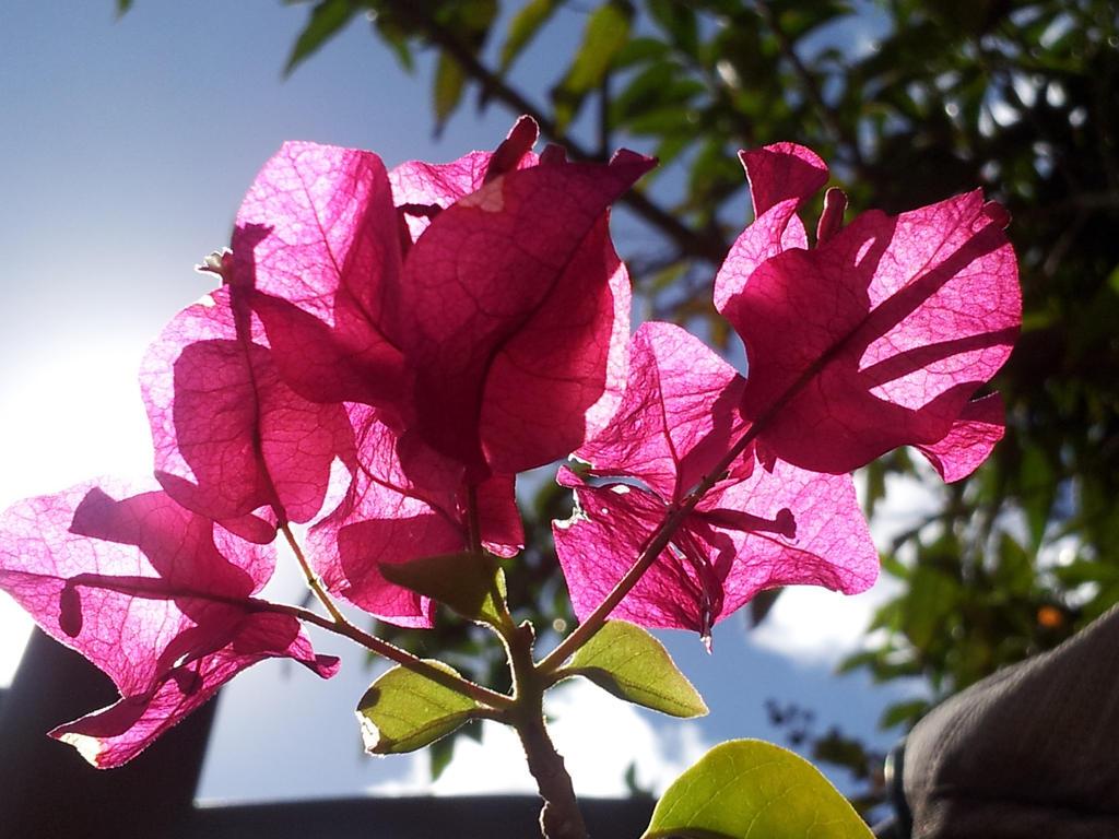 A Flower by mandyblue