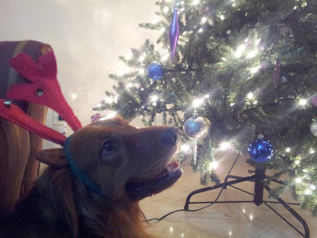A very Kalu Christmas by mandyblue