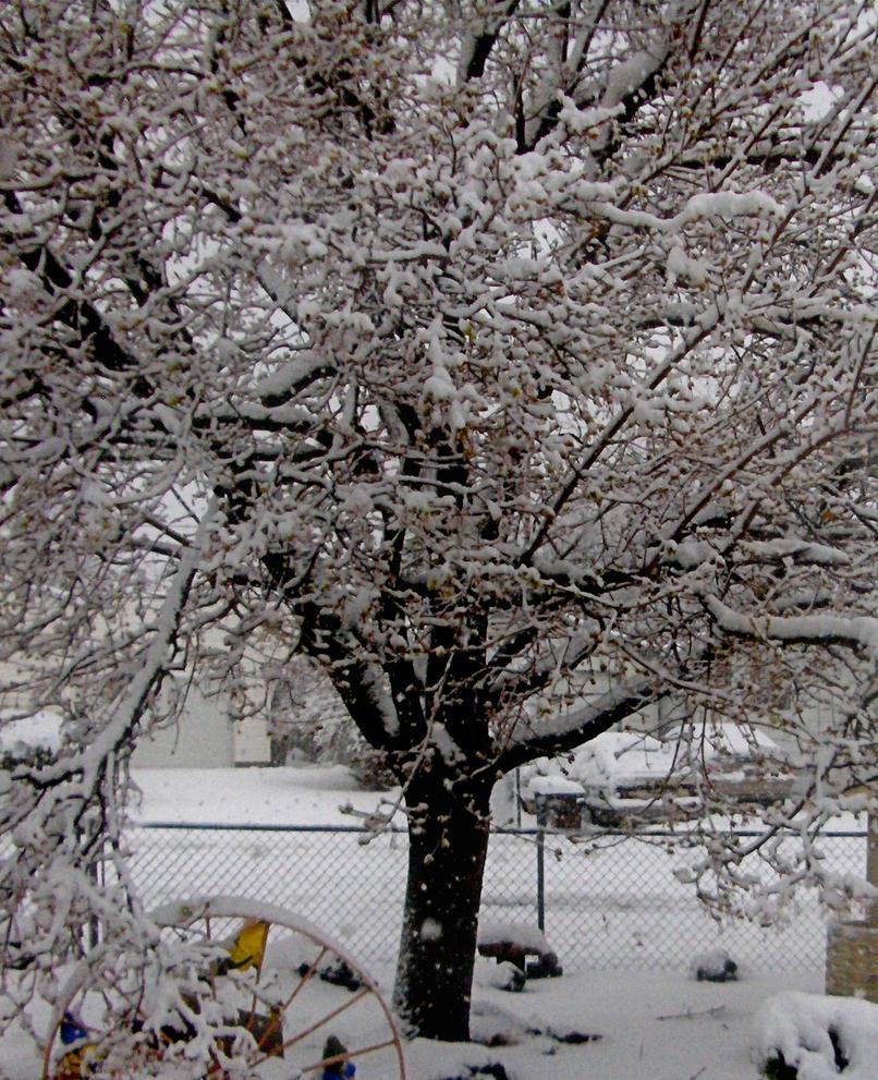 A Cold Tree by sparkyrat