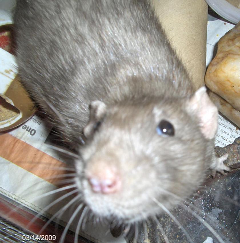 My Mink by sparkyrat