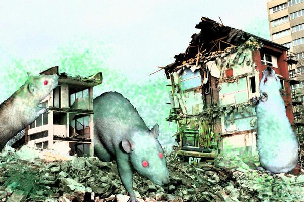 rats by sparkyrat