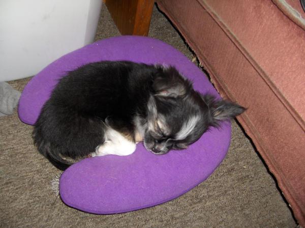 Sleeping Tux by sparkyrat