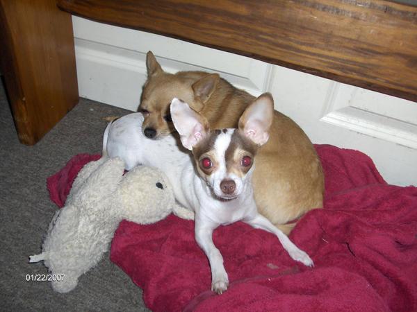 Tiko and Peanut by sparkyrat