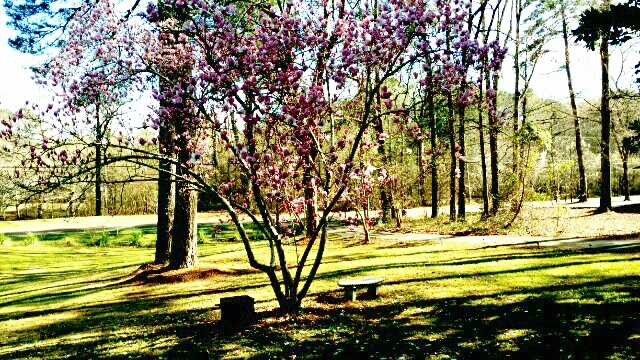 Dogwood Spring by BlackJulip