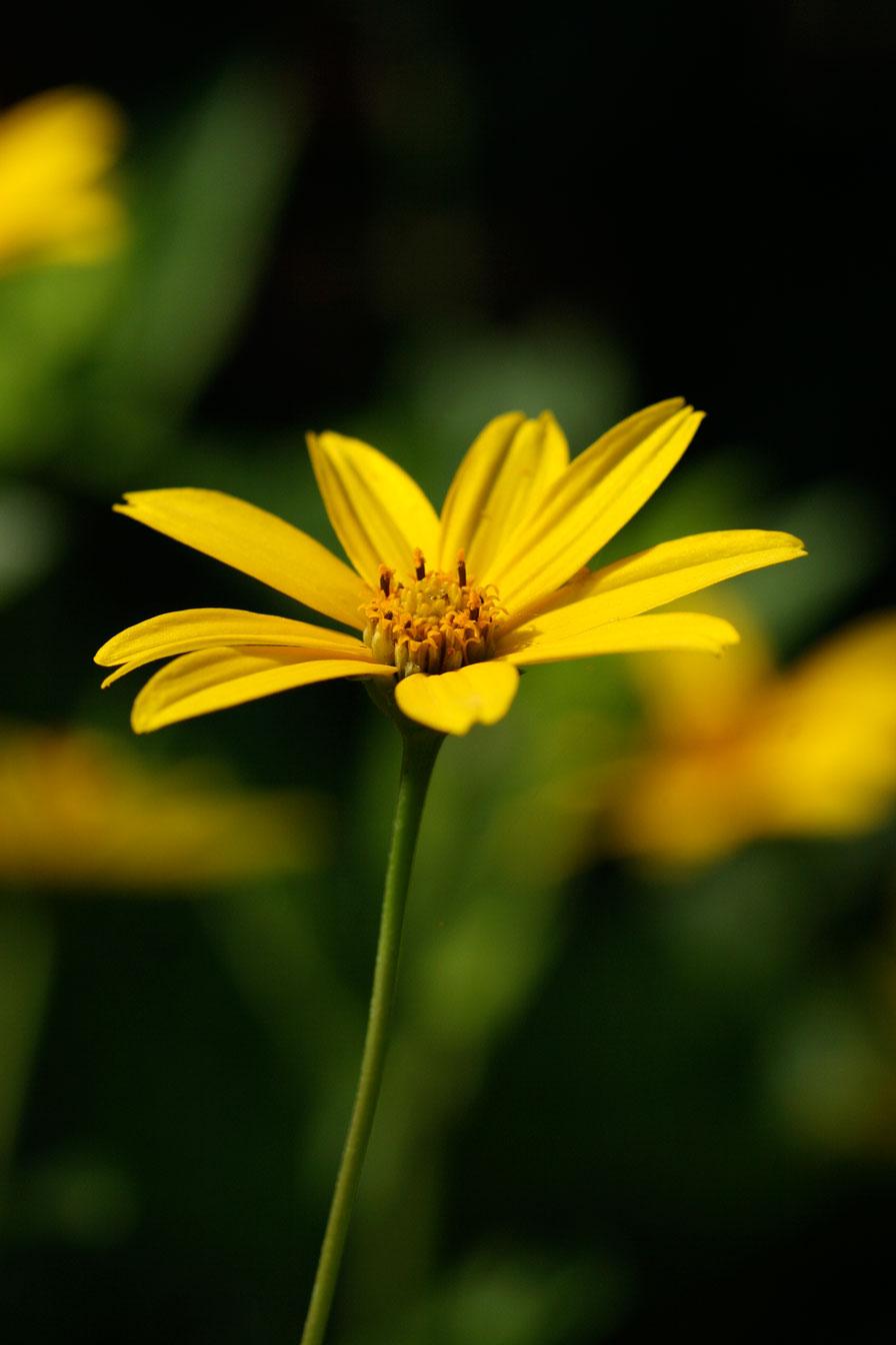 the flower by steelangel