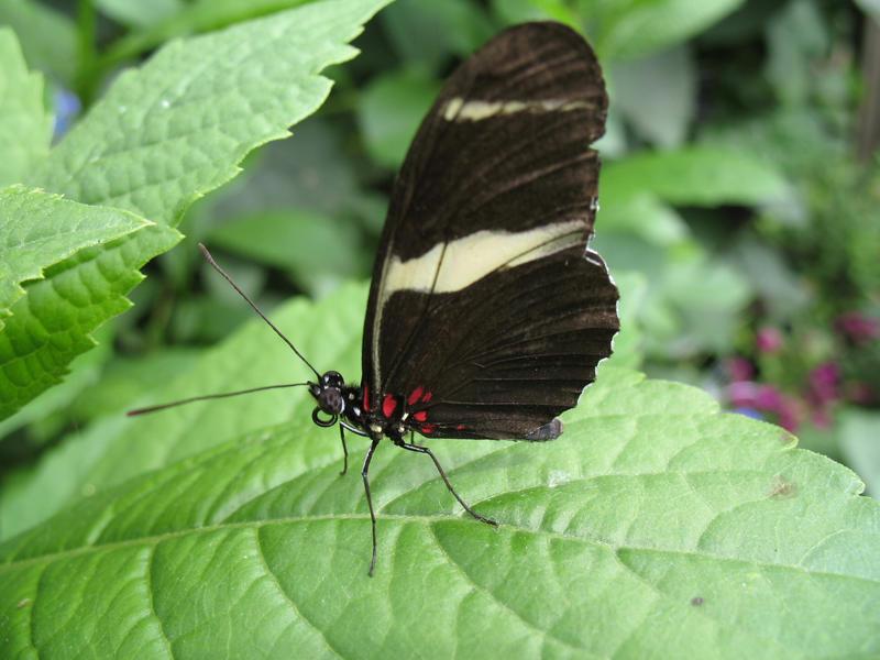 Butterfly 03 by Sunspot01
